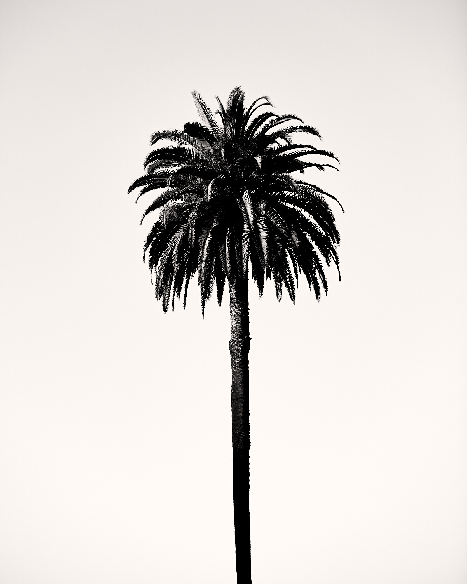Exley_200206_Palm_Tree_001